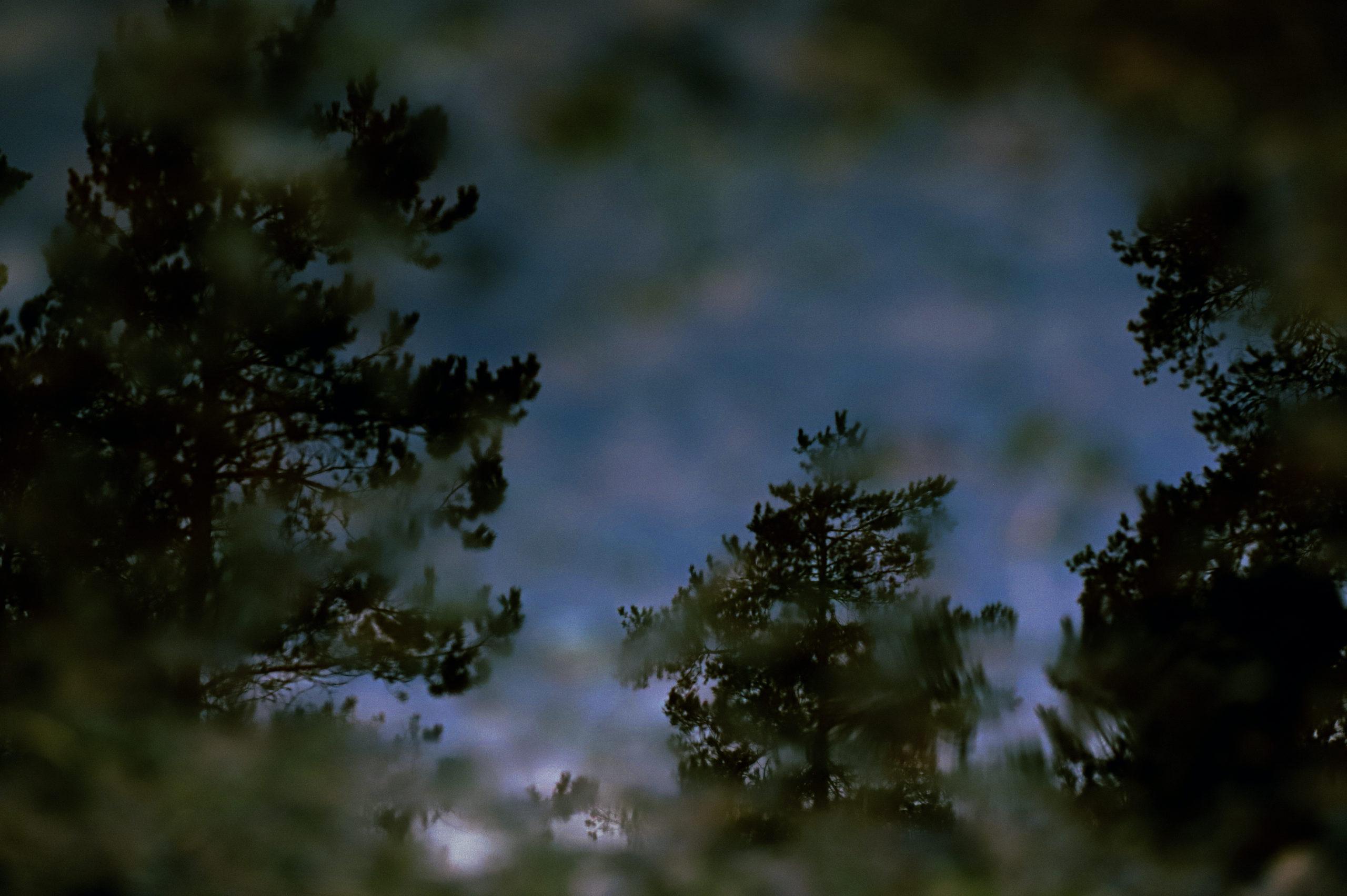 Heijastuskuva kuusen ja mäntyjen oksista