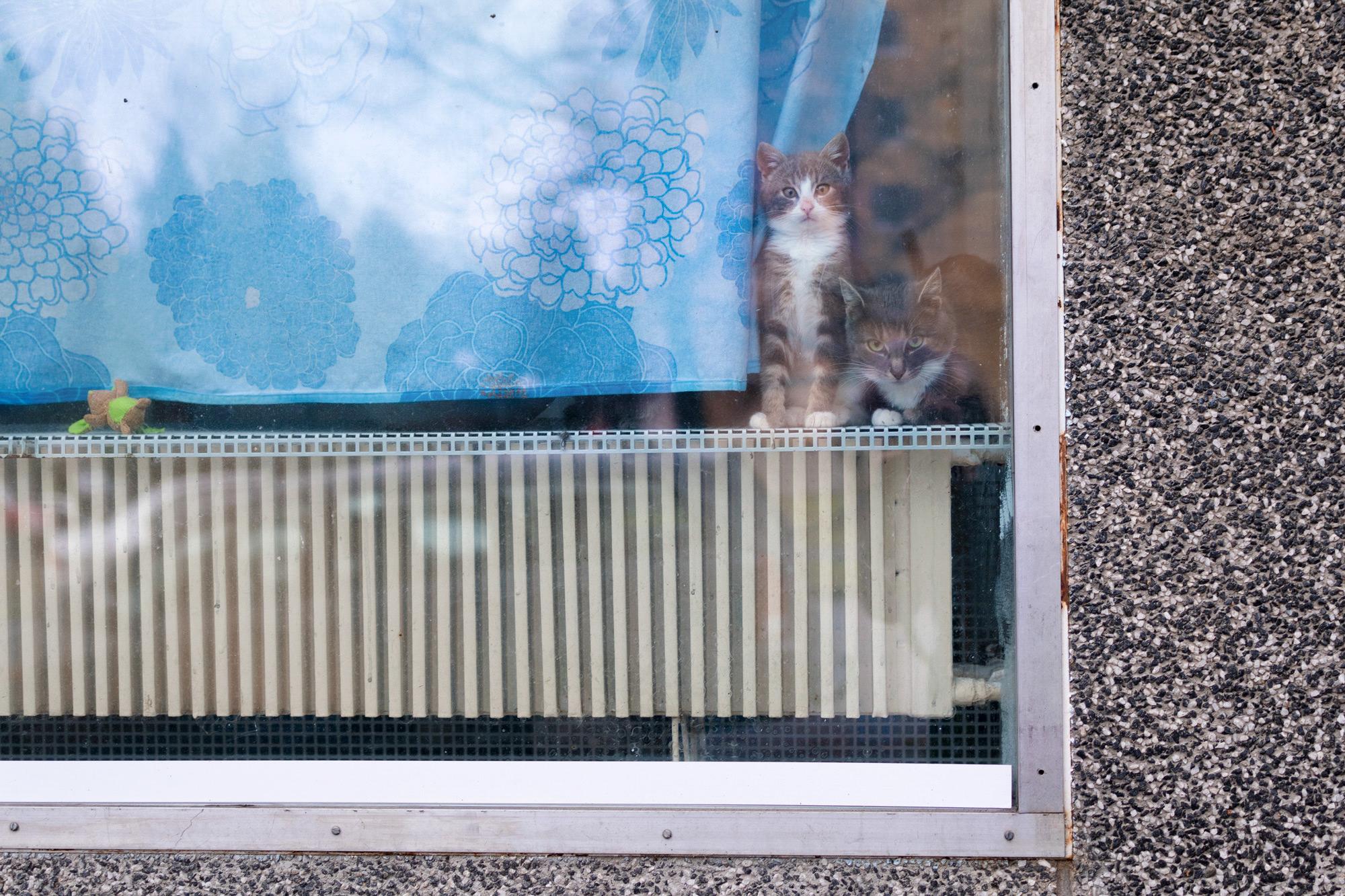 Kaksi kissaa katsoo ikkunasta ulos.