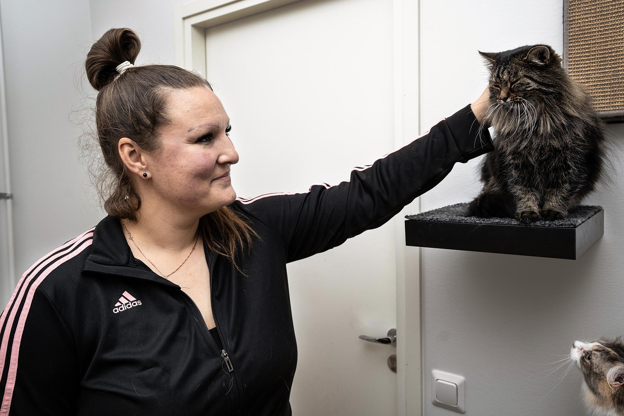 Henkilö silittää seinään kiinnitetyllä tasolla istuvaa kissaa