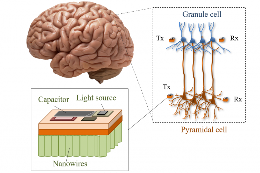 Concept image of a brain that has nano scale communications depicted